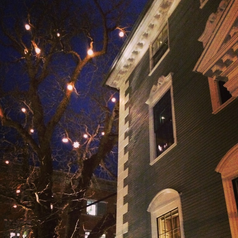 Horse-chestnut-tree-with-lights-and-house-D